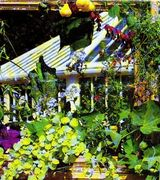 Greenhouse and Conservatory  Plants suitable only for the Greenhouse or Conservatory