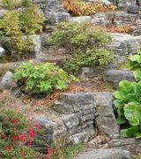 Image of Rockeries - Alpine Plants/Rock Plants