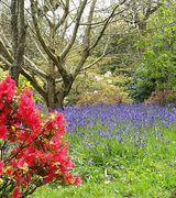 Image of Woodland Gardens  Woodland Plants