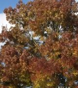 Image of Autumn Colour Trees