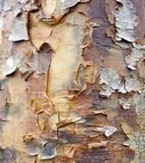 Image of Ornamental Bark