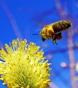 Image of Attract Bees