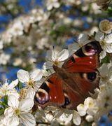 Image of Attract Butterflies