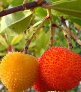 Ornamental Fruit