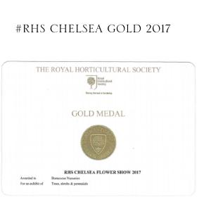 Chelsea Gold