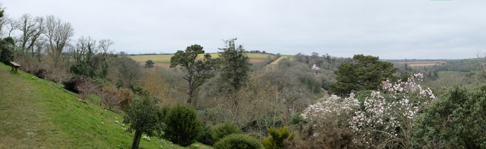 Main photo for Gardens open at Caerhays 19th Feb.