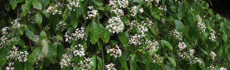 Main photo for Burncoose Nurseries showcase plants as pollinators