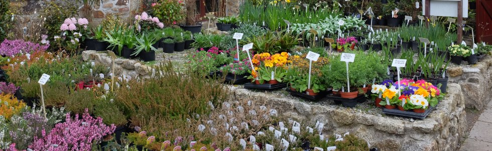 Plantsman's Auction at Burncoose