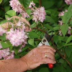 June Amateur Gardener Tips