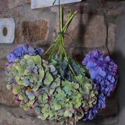 September  Amateur Gardener Tips