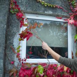 September Woodland Garden Tips