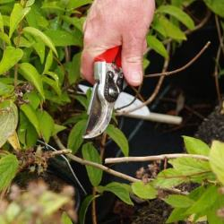 July Woodland Garden Tips