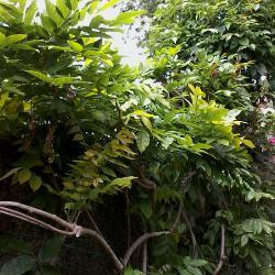 July Amateur Gardener Tips