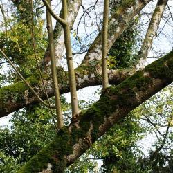 May Woodland Garden Tips