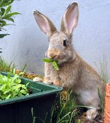 Rabbit Resistant Plants