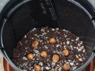 Styrax seeds in pot