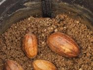 1 seeds in deeper pots