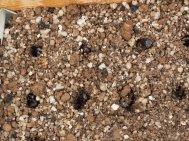 Seed spacing