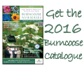Order the 2016 Burncoose Catalogue