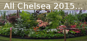 All information on Chelsea 2015
