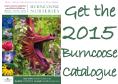 Order the 2015 Burncoose Catalogue