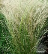 caring for grasses
