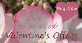 Valentine's offers