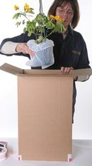 5. Plant posistioned into parcel