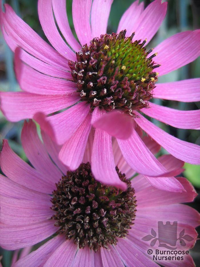 wedding flower arrangements boulevard florist flower mail order pelalusa the king of mail order. Black Bedroom Furniture Sets. Home Design Ideas
