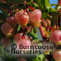 Autumn fruitfulness offer