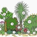 Photo of A selection of Cornish Exotic plants to make the perfect border - SAVE £35