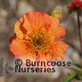 Small image of GEUM