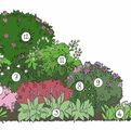 Photo of A selection of woodland plants  plants to make the perfect border - SAVE £35.50