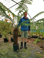 1. The tree fern to wrap