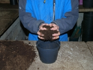 1.	Fill pot two thirds deep with compost