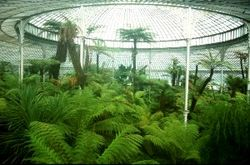 Botanical gardens tree ferns & glass roof