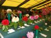 Rosemoor Show