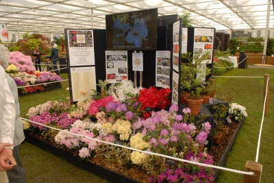 RCMG Stand at Chelsea 2016