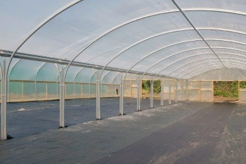 New Poly Tunnel