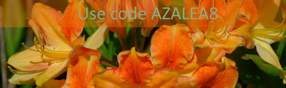 Free Azalea this week!