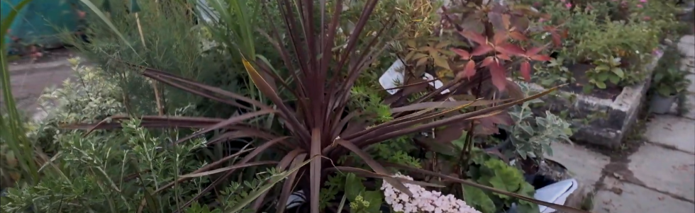 Plants for coastal locations