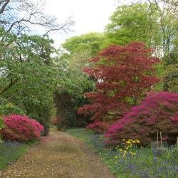 Burncoose Gardens Open Day