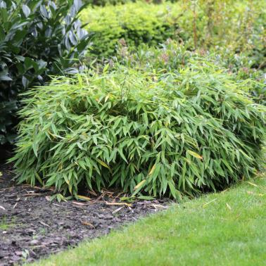 Burncoose enters two entries for Plant of the Year