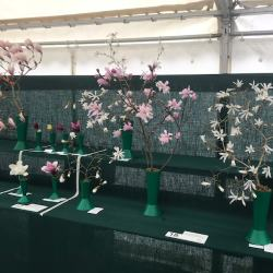 Savill Garden RHS Flower Show