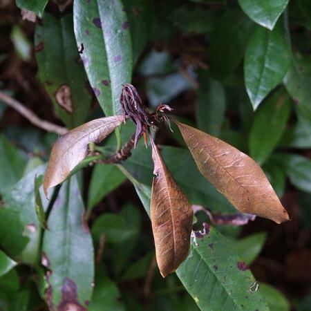 August Woodland Garden Tips