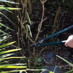 April Amateur Gardener Tips