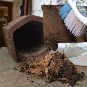February Woodland Gardener Tips