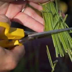 June Herbaceous Border Tips