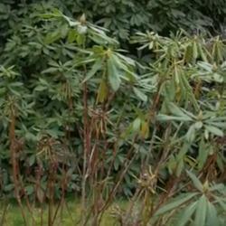 June Woodland Garden Tips
