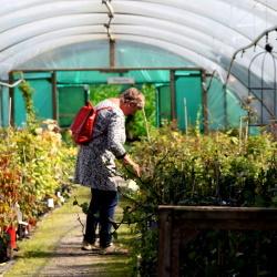 Burncoose Nursery Opens Again